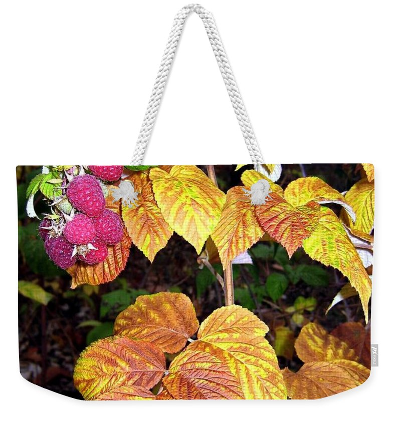 Autumn Weekender Tote Bag featuring the photograph Autumn Raspberries by Will Borden