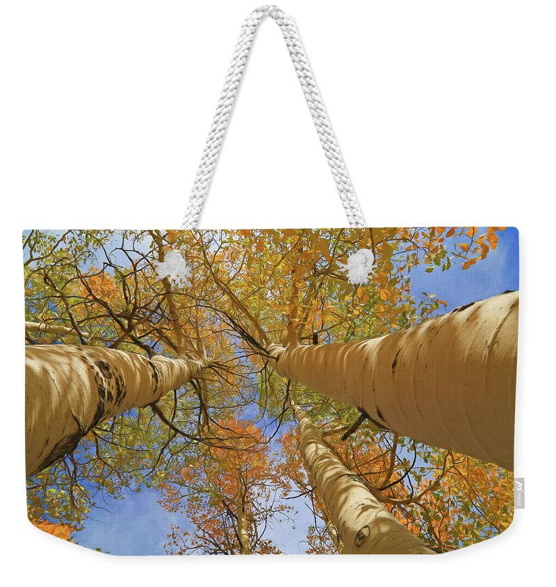 Logan Canyon Weekender Tote Bag featuring the photograph Autumn Straight Up by Donna Kennedy