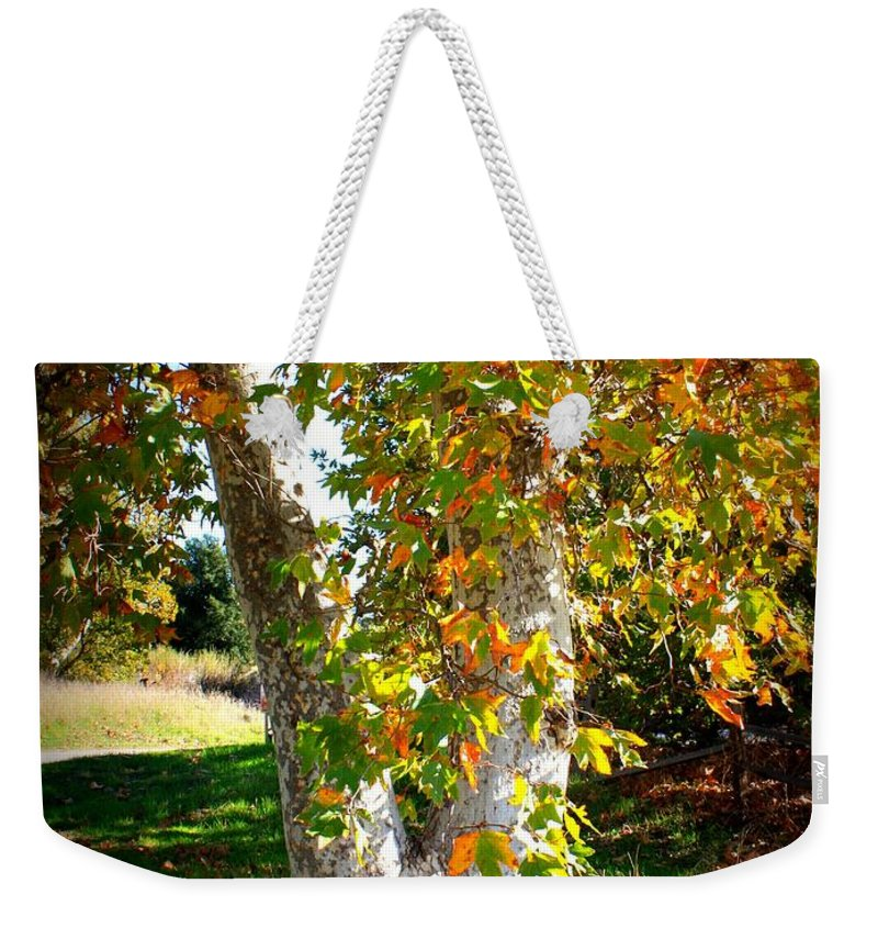 Autumn Tree Weekender Tote Bag featuring the photograph Autumn Sycamore Tree by Carol Groenen