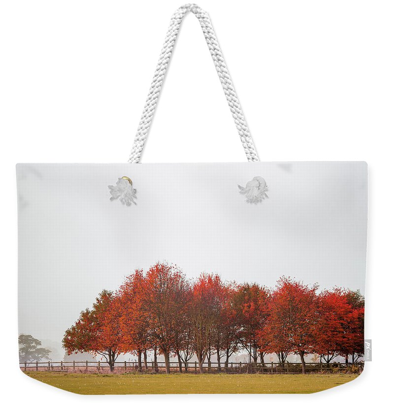 Autumn Weekender Tote Bag featuring the photograph Autumn Trees by Zoltan Schadel