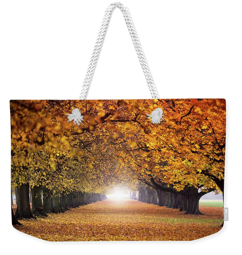 Autumn Weekender Tote Bag featuring the photograph Autumn Tunnel by Zoltan Schadel