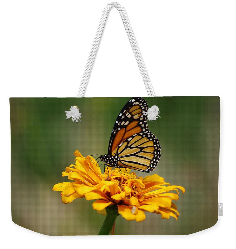 Autumn Weekender Tote Bag featuring the photograph Autumn's Wings by Jenny Gandert