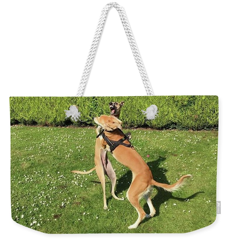 Persiangreyhound Weekender Tote Bag featuring the photograph Ava The Saluki And Finly The Lurcher by John Edwards