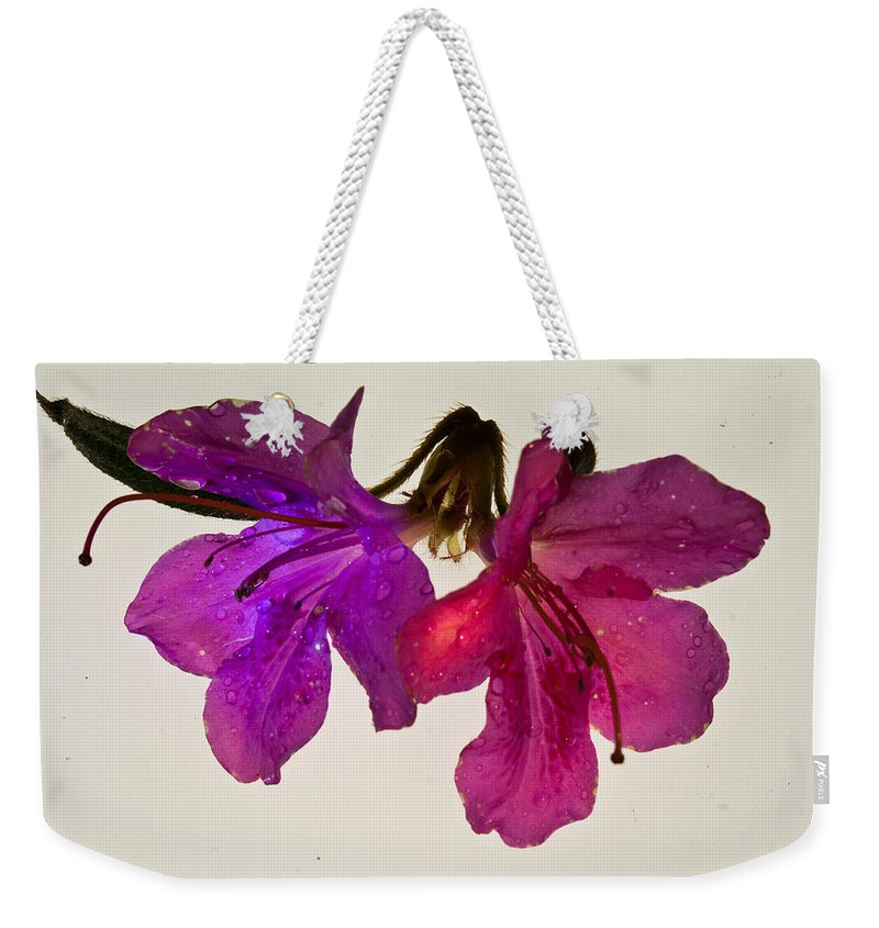 Azalea Weekender Tote Bag featuring the photograph Azalea Doublet by Douglas Barnett
