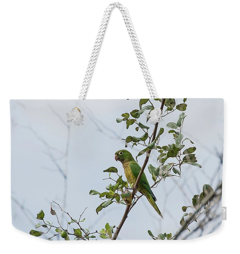 Ronnie Maum Weekender Tote Bag featuring the photograph Aztec Parakeet by Ronnie Maum