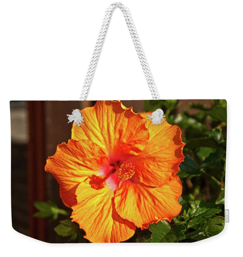 Flowers Weekender Tote Bag featuring the photograph B Glavin Garden 11604 by Guy Whiteley