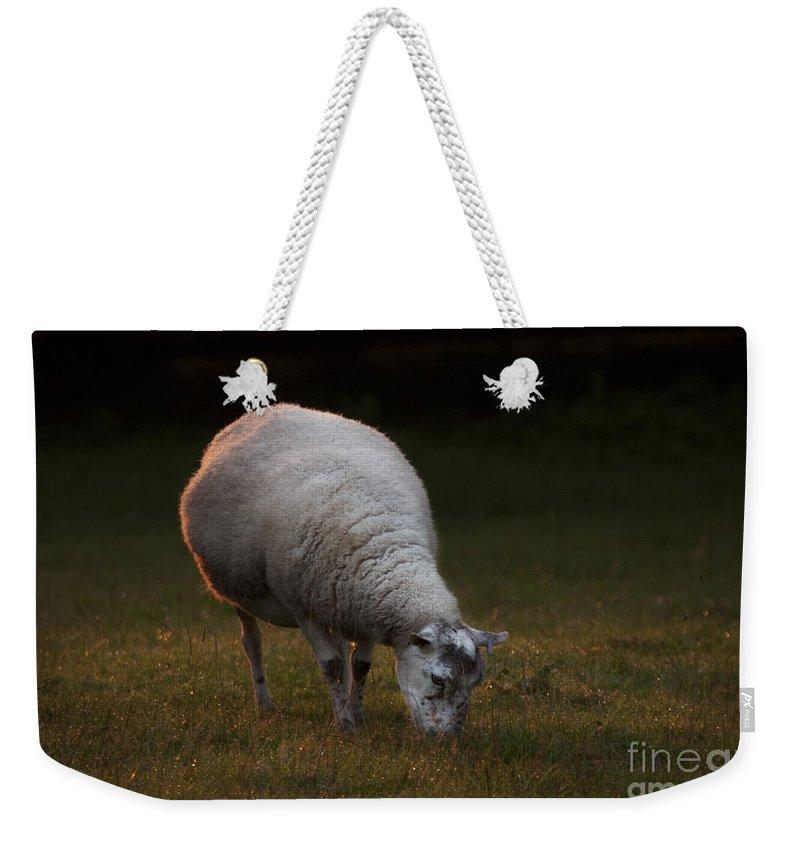 Sheep Weekender Tote Bag featuring the photograph Baa Baa by Angel Ciesniarska