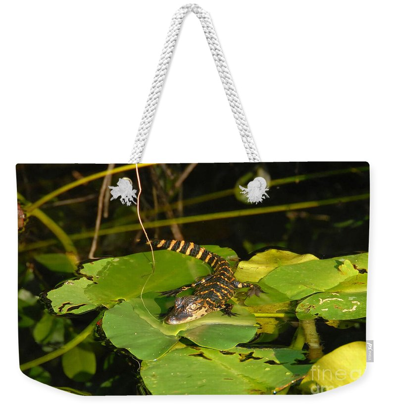 Baby Weekender Tote Bag featuring the photograph Baby Alligator by David Lee Thompson