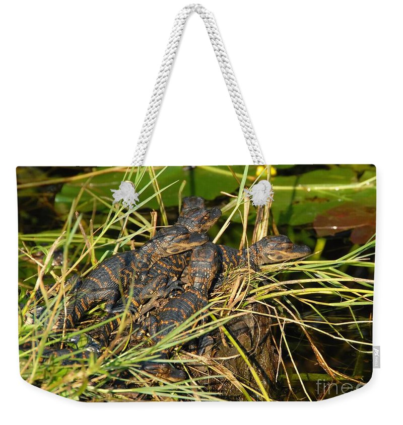 Alligators Weekender Tote Bag featuring the photograph Baby Alligators by David Lee Thompson