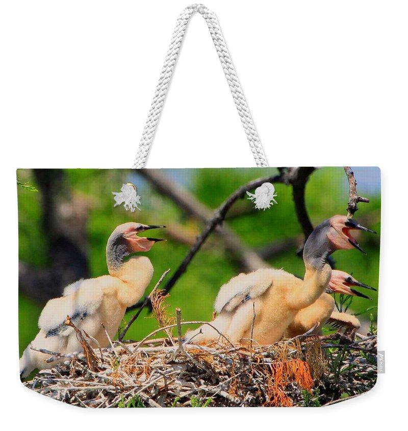 Anhinga Weekender Tote Bag featuring the photograph Baby Anhinga Chicks by Barbara Bowen