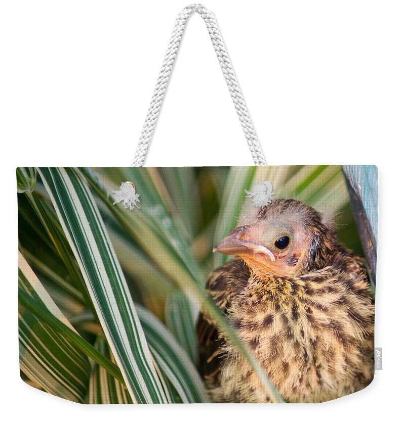 Bird Weekender Tote Bag featuring the photograph Baby Bird Peering Out by Douglas Barnett