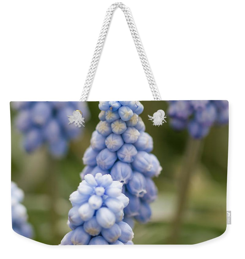 Colorado Weekender Tote Bag featuring the photograph Baby Blue by Ashley M Conger