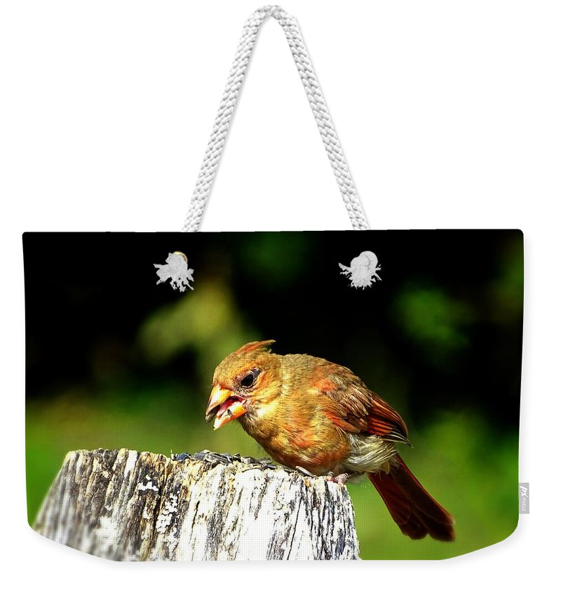 Bird With The Seed Weekender Tote Bag featuring the photograph Baby Cardinal by Lilia D