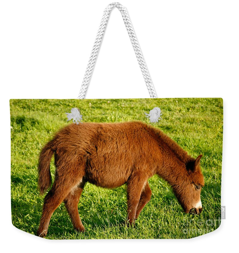 Animals Weekender Tote Bag featuring the photograph Baby Donkey by Gaspar Avila