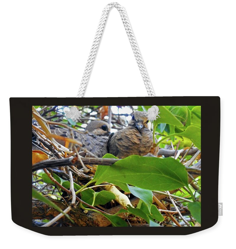 Birds Weekender Tote Bag featuring the photograph Baby Doves 1 by Ron Kandt
