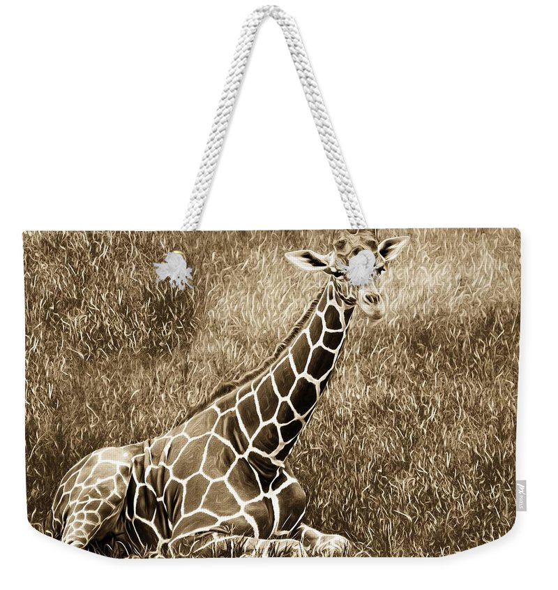Alicegipsonphotographs Weekender Tote Bag featuring the photograph Baby Giraffe In Grasses by Alice Gipson