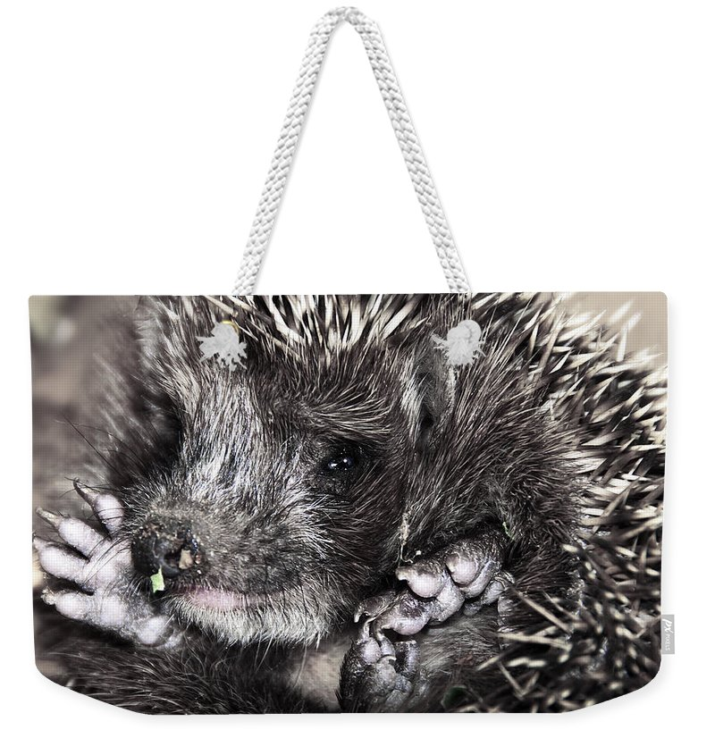 Animal Weekender Tote Bag featuring the photograph Baby Hedgehog by Svetlana Sewell