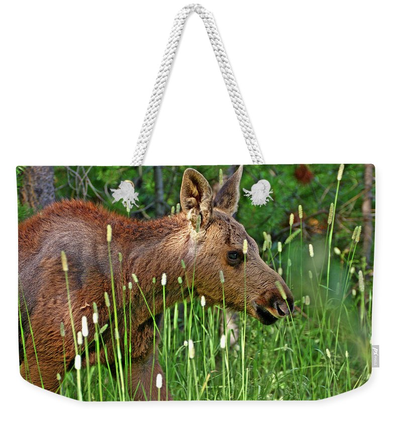 Moose Weekender Tote Bag featuring the photograph Baby Moose by Scott Mahon