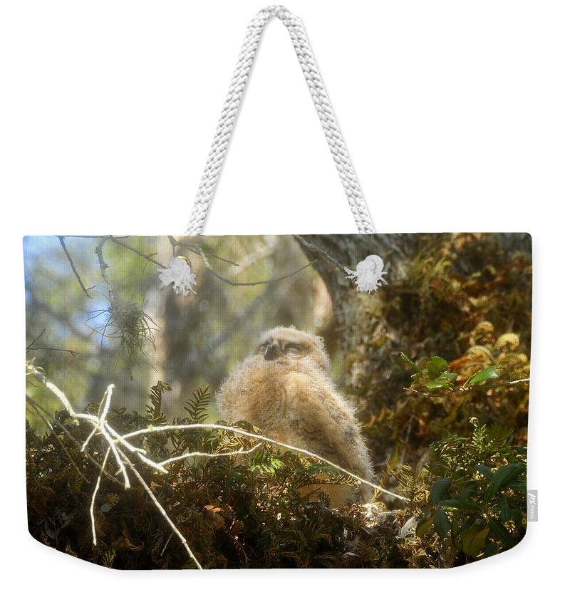 Great Horned Owl Weekender Tote Bag featuring the photograph Baby Owl Sleeping by David Lee Thompson