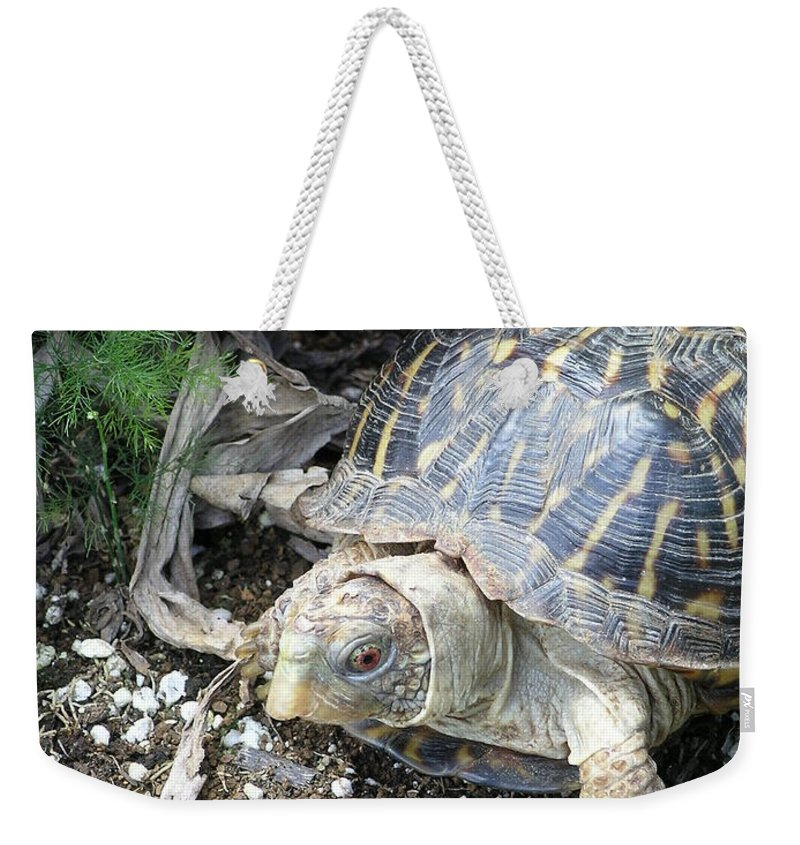 Mary Deal Weekender Tote Bag featuring the photograph Baby Tortoise by Mary Deal