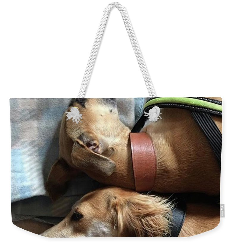 Persiangreyhound Weekender Tote Bag featuring the photograph Back 2 Back - Ava And Finly Relaxing At by John Edwards