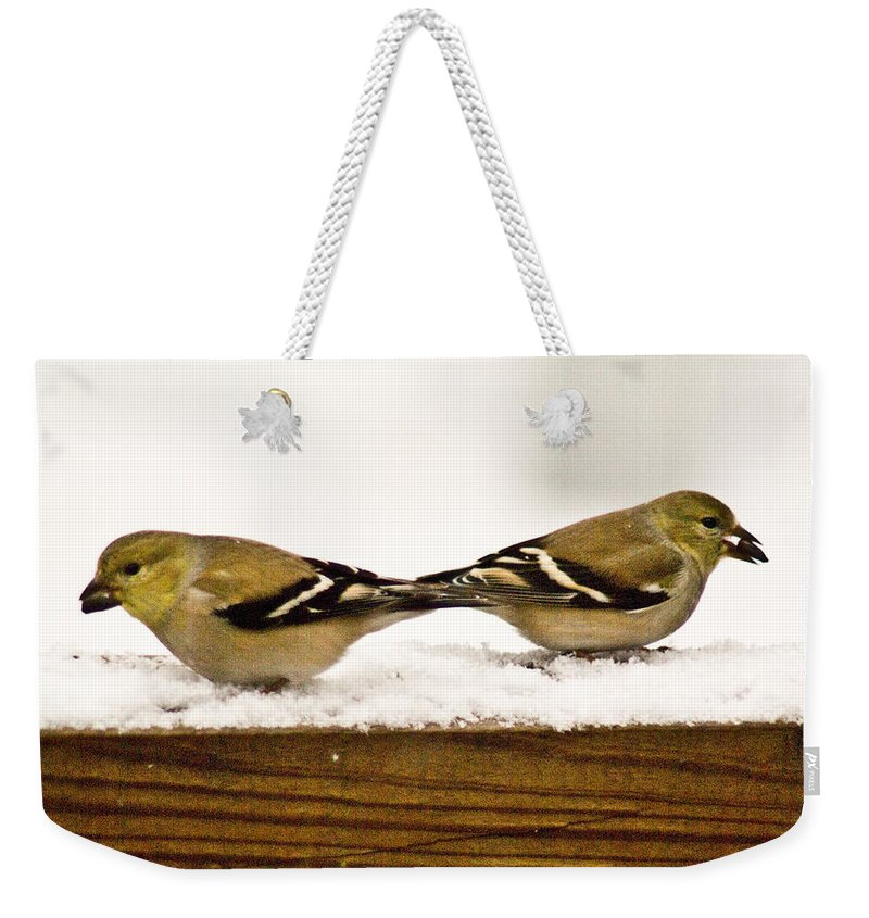 American Weekender Tote Bag featuring the photograph Back To Back American Gold Finches by Douglas Barnett