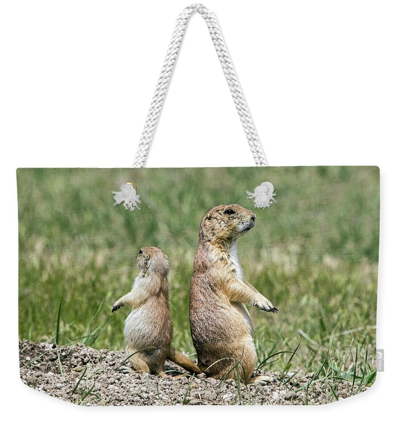 Prairie Dog Weekender Tote Bag featuring the photograph Back To Back Prairie Dogs by Ira Marcus
