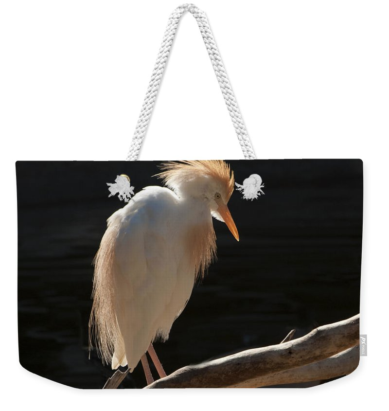 Bird Weekender Tote Bag featuring the photograph Backlit Egret by Sandra Bronstein