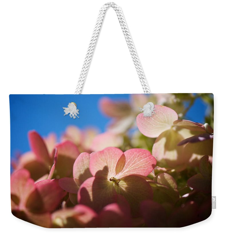 Hydrangea Weekender Tote Bag featuring the photograph Backlit Hydrangea by Lisa Knechtel