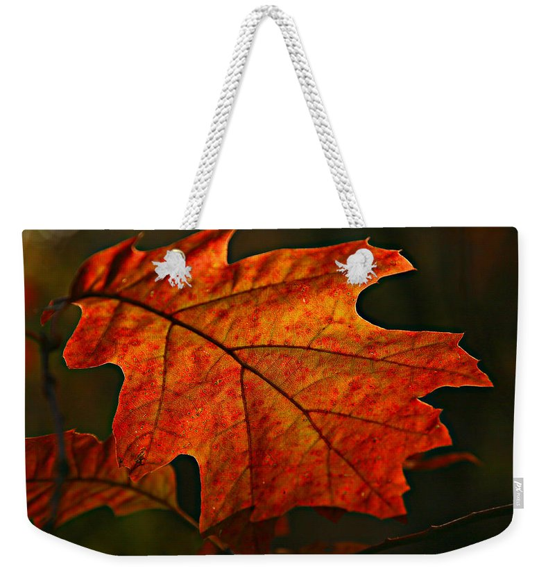 Fall Oak Leaf Leaves Orange Red Weekender Tote Bag featuring the photograph Backlit Leaf by Shari Jardina