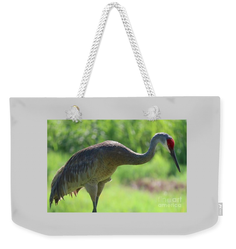 Sandhill Weekender Tote Bag featuring the photograph Backlit Sandhill by Carol Groenen
