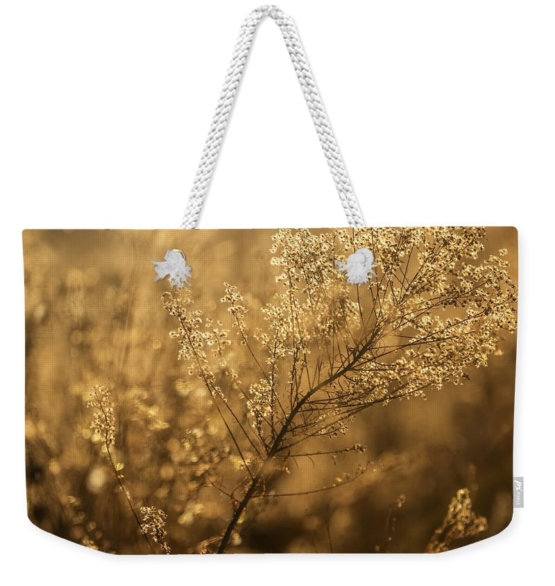 Wildflower Weekender Tote Bag featuring the photograph Backlit Wildflower Seeds In Autumn by Vishwanath Bhat
