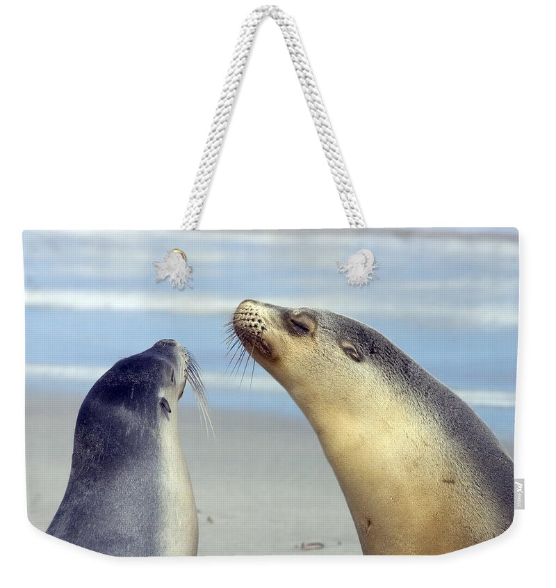 Sea Lion Weekender Tote Bag featuring the photograph Backtalk by Mike Dawson