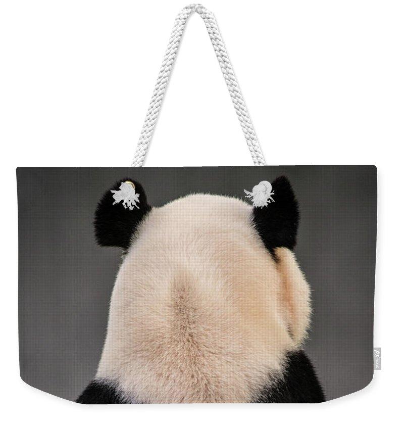 Panda Weekender Tote Bag featuring the photograph Backward Panda by Don Johnson