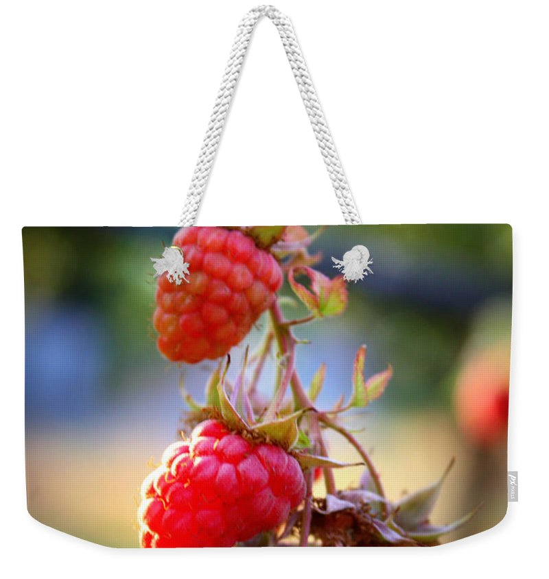 Food And Beverage Weekender Tote Bag featuring the photograph Backyard Garden Series - The Freshest Raspberries by Carol Groenen