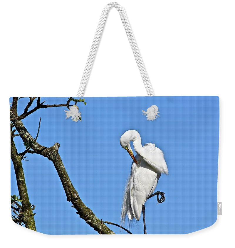 Bird Weekender Tote Bag featuring the photograph Balancing Act by Diana Hatcher