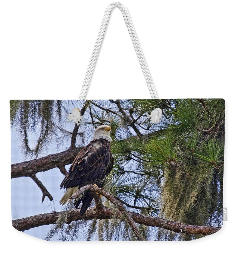 Bald Eagle Weekender Tote Bag featuring the photograph Bald Eagle By H H Photography Of Florida by HH Photography of Florida