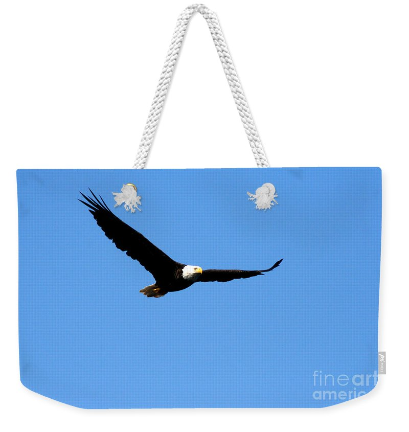 Eagle Weekender Tote Bag featuring the photograph Bald Eagle II by Thomas Marchessault
