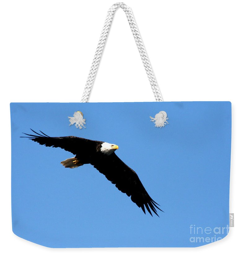 Eagle Weekender Tote Bag featuring the photograph Bald Eagle IIi by Thomas Marchessault