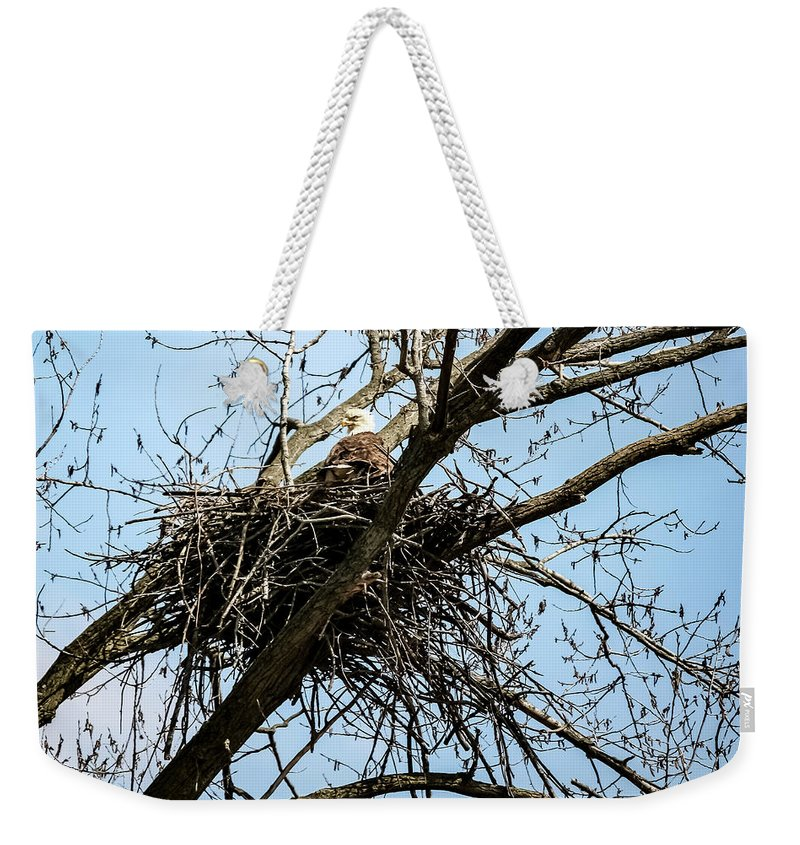Bald Eagle In The Nest Weekender Tote Bag featuring the photograph Bald Eagle In The Nest by Cynthia Woods