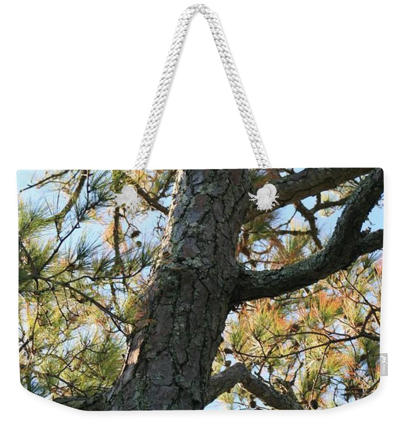 Tree Weekender Tote Bag featuring the photograph Bald Head Tree by Nadine Rippelmeyer