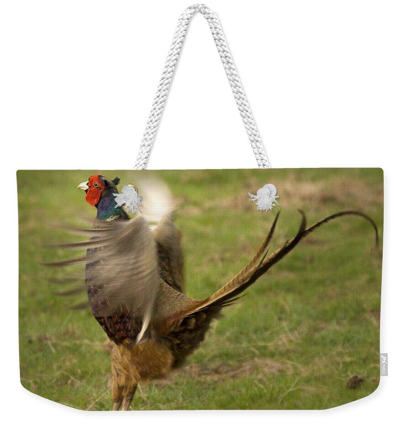 Pheasant Weekender Tote Bag featuring the photograph Ballet Dancer by Angel Ciesniarska