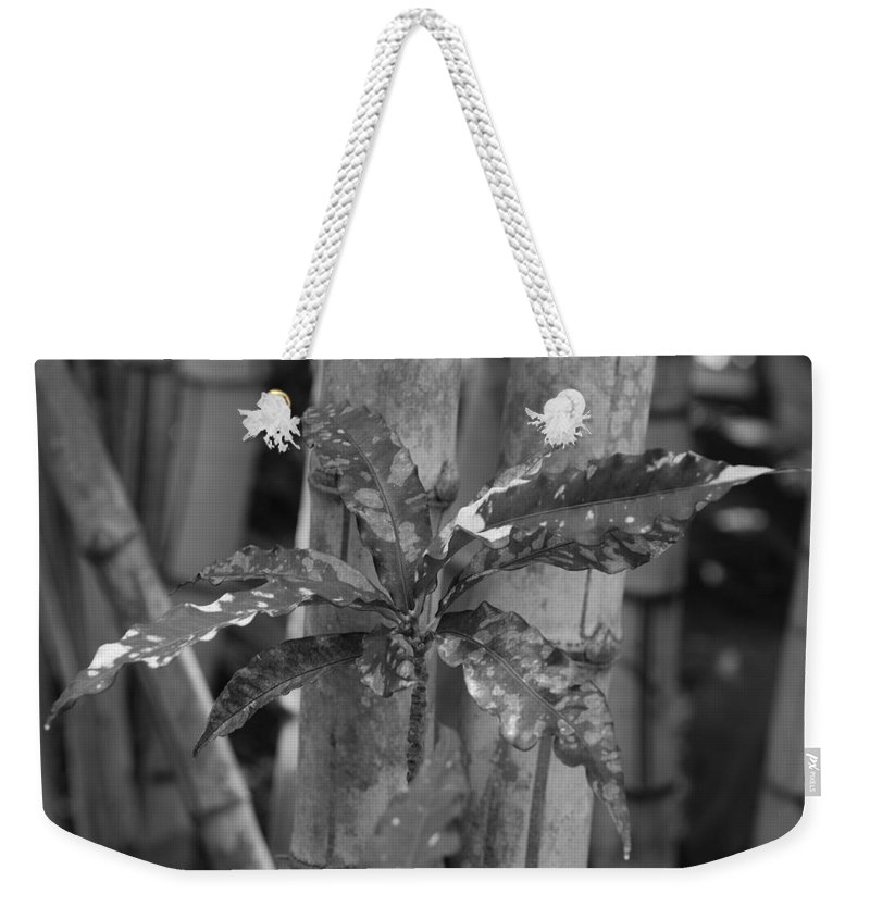 Macro Weekender Tote Bag featuring the photograph Bamboo Flower by Rob Hans