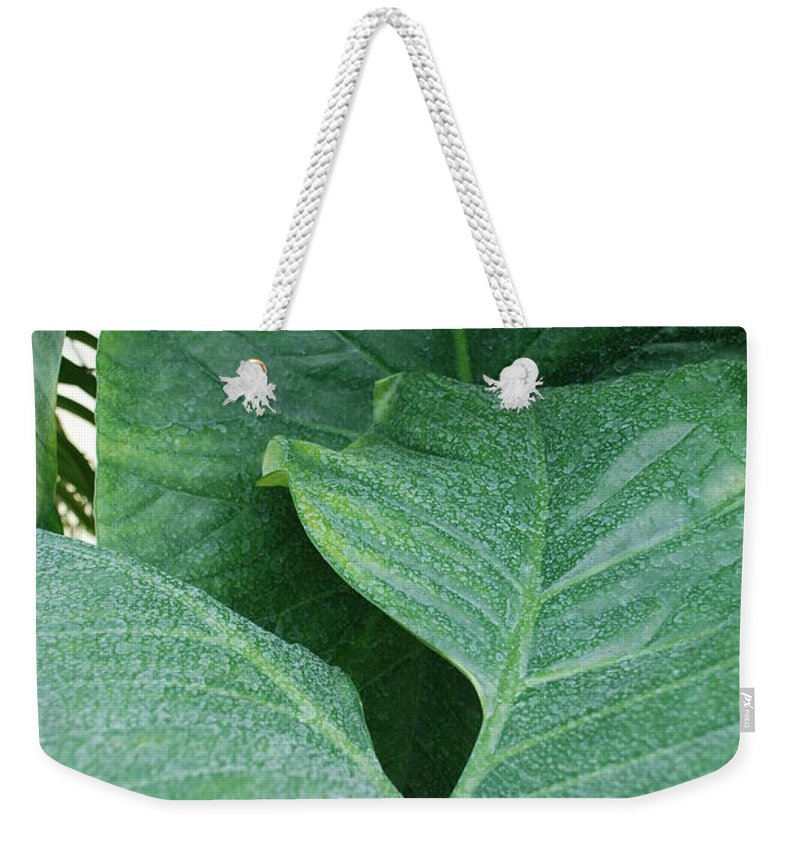 Macro Weekender Tote Bag featuring the photograph Banana Leaves by Rob Hans