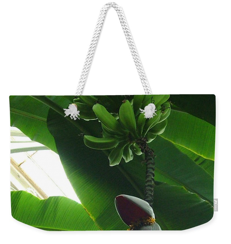 Kew Weekender Tote Bag featuring the photograph Banana Plant Kew London England by Heather Lennox
