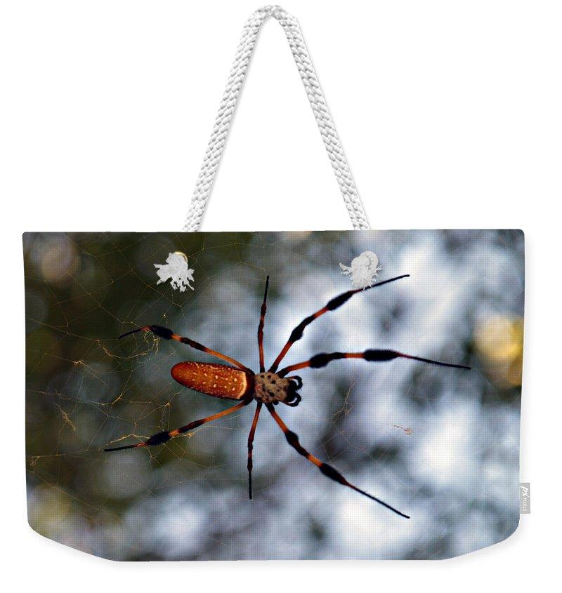 Arachnid Weekender Tote Bag featuring the photograph Banana Spider  3 by Bob Johnson