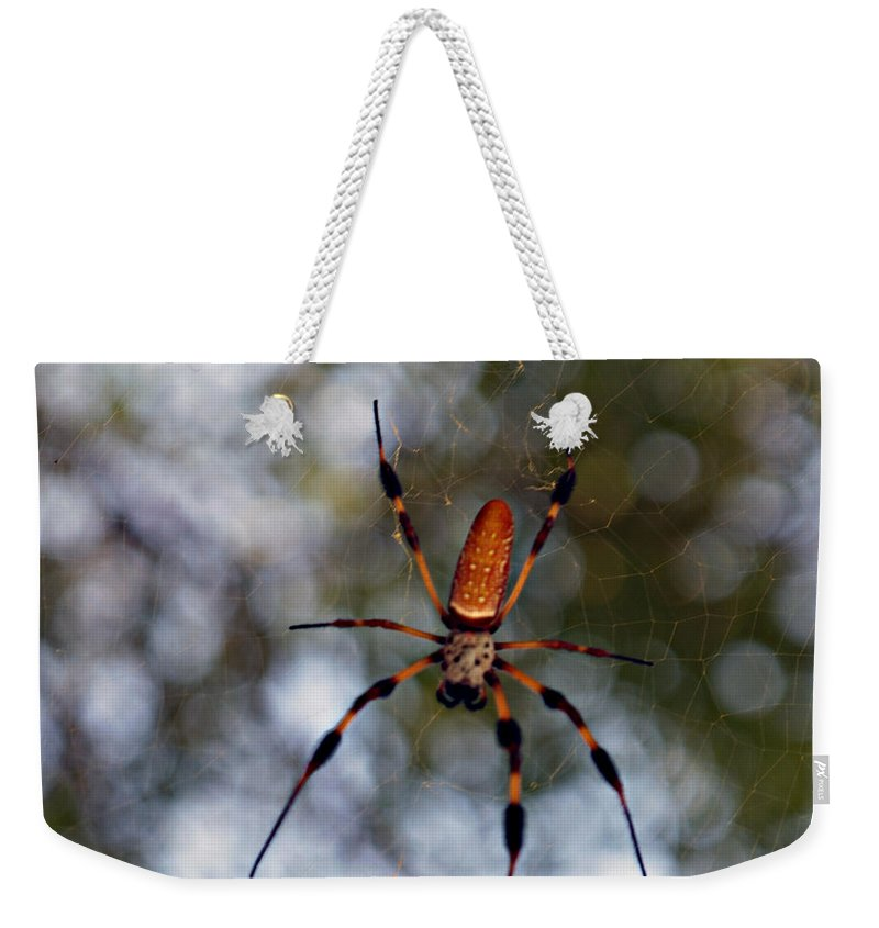 Arachnid Weekender Tote Bag featuring the photograph Banana Spider 2 by Bob Johnson