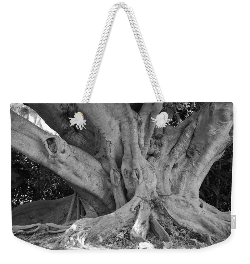 Tree Weekender Tote Bag featuring the photograph Banyan Tree by Rob Hans