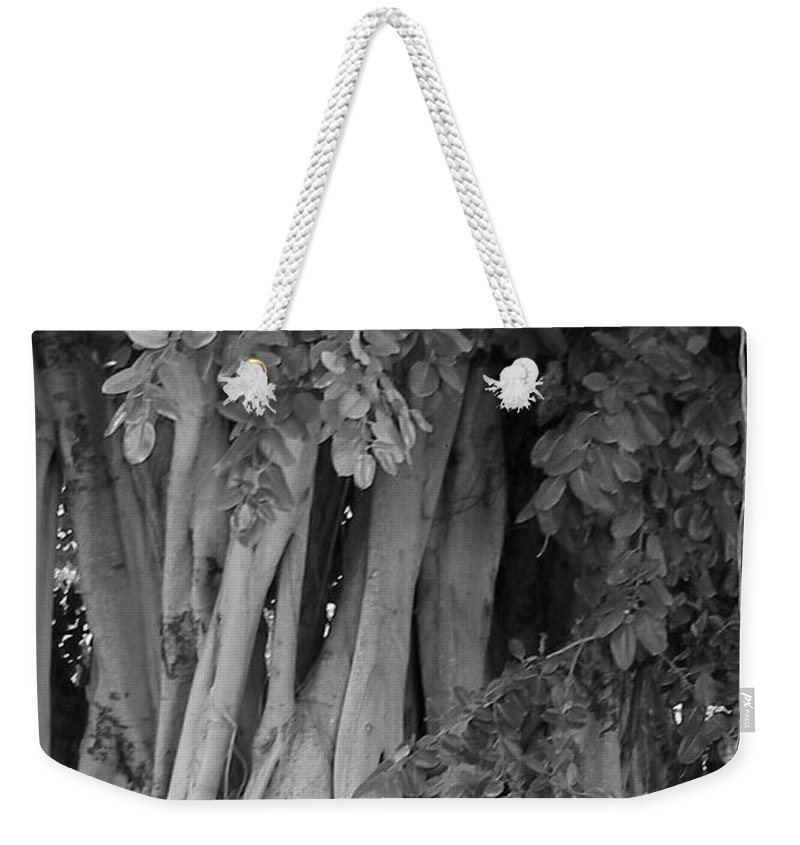 Weekender Tote Bag featuring the photograph Banyans by Maria Bonnier-Perez