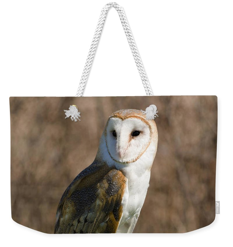 Barn Owl Weekender Tote Bag featuring the photograph Barn Owl 2 by Tracy Winter